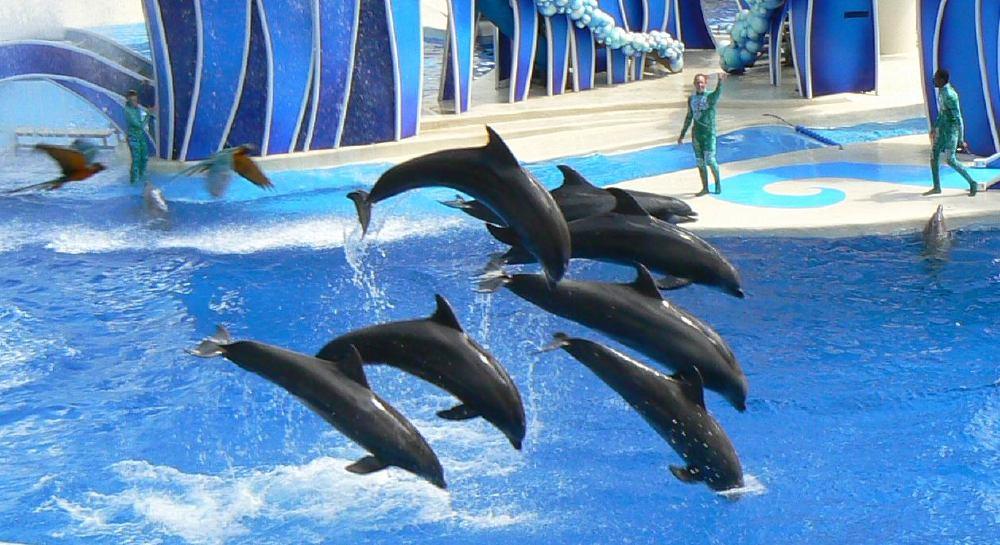 Roteiro 8 dias em Orlando: SeaWorld