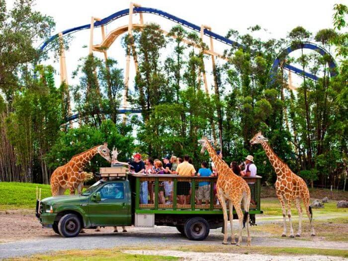 Parque Busch Gardens em Tampa: safári e animais selvagens