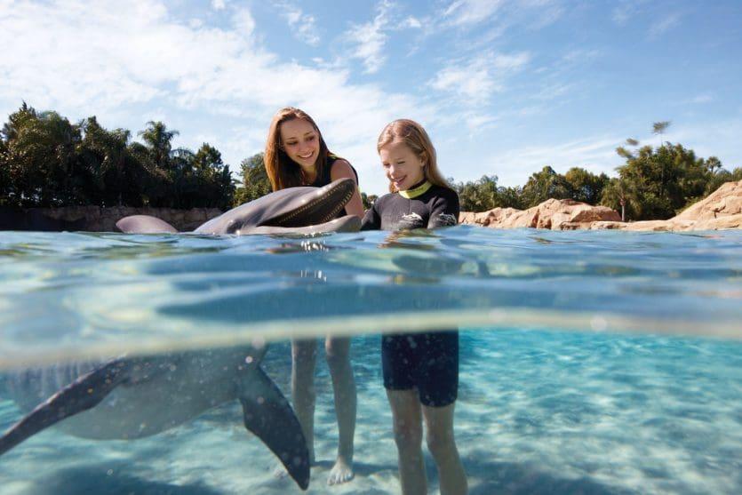 Nado com golfinhos no parque Discovery Cove em Orlando