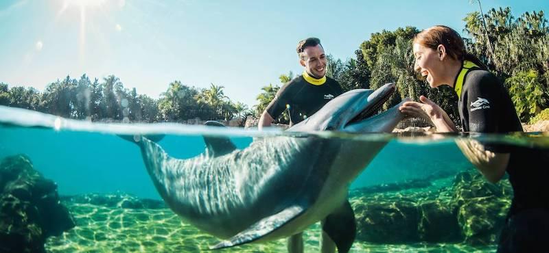 Parque Discovery Cove em Orlando: Dolphin Lagoon