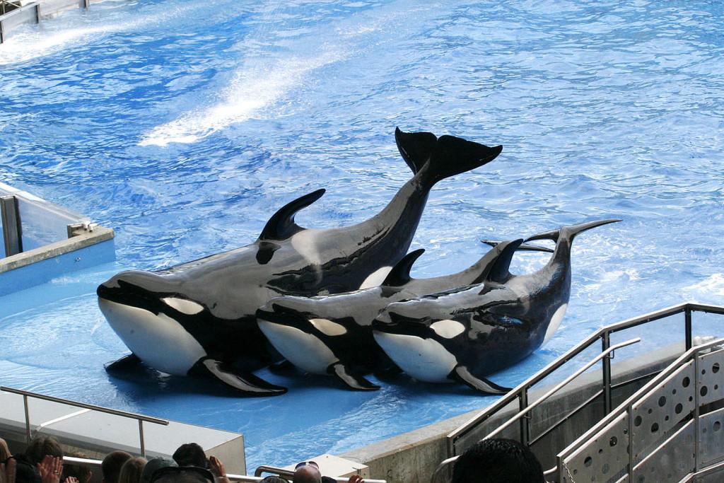 Parque SeaWorld em Orlando: show com baleias