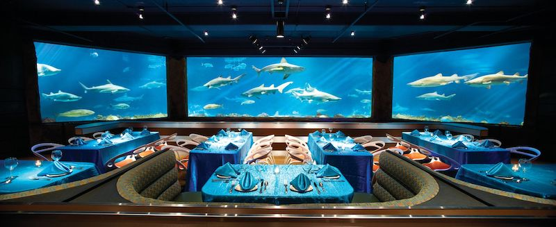 Parque SeaWorld em Orlando: Sharks Underwater Grill and Bar