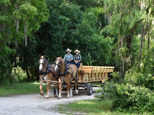 Escape to Walt's Wilderness na Disney Orlando