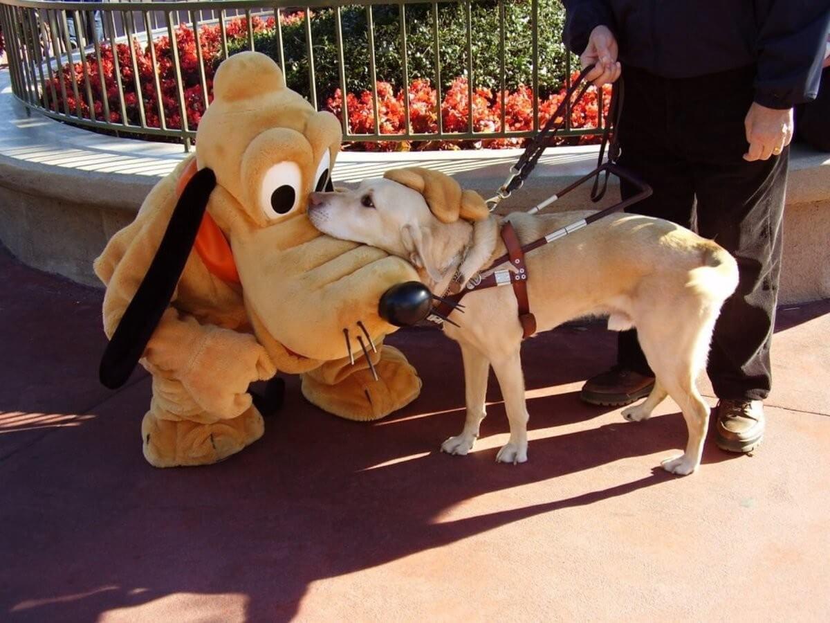 7 dicas para idosos e portadores de necessidades especiais em Orlando: cão guia na Disney