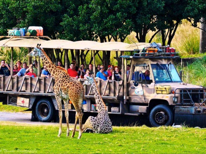 Kilimanjaro Safaris no parque Animal Kingdom da Disney Orlando