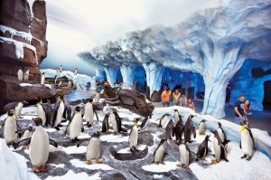 7 atrações e brinquedos do Parque SeaWorld em Orlando: Antarctica: Empire of the Penguin