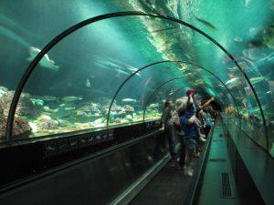 7 atrações e brinquedos do Parque SeaWorld em Orlando: Shark Encounter