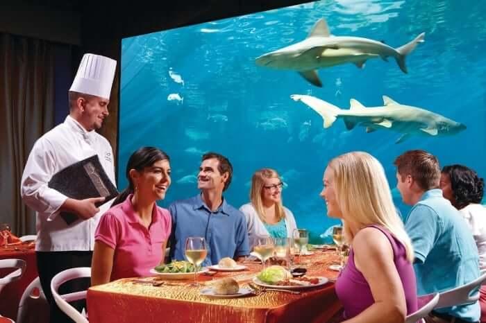 Restaurantes do parque SeaWorld em Orlando: restaurante Sharks Underwater Grill