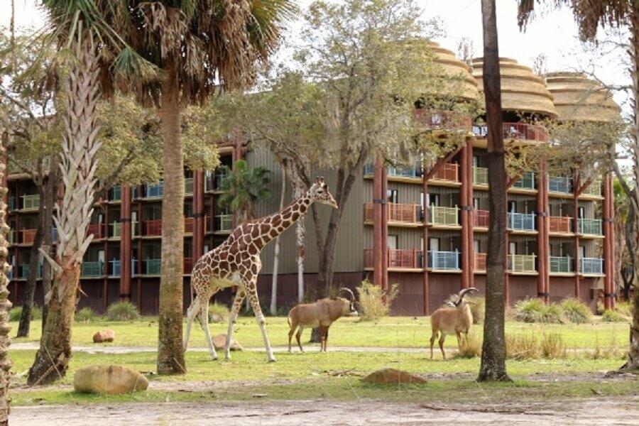 Coisas para fazer de graça na Disney Orlando: hotel Disney's Animal Kingdom Lodge