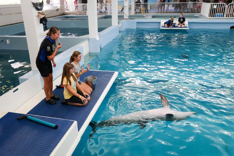 Pontos turísticos em Clearwater: Clearwater Marine Aquarium