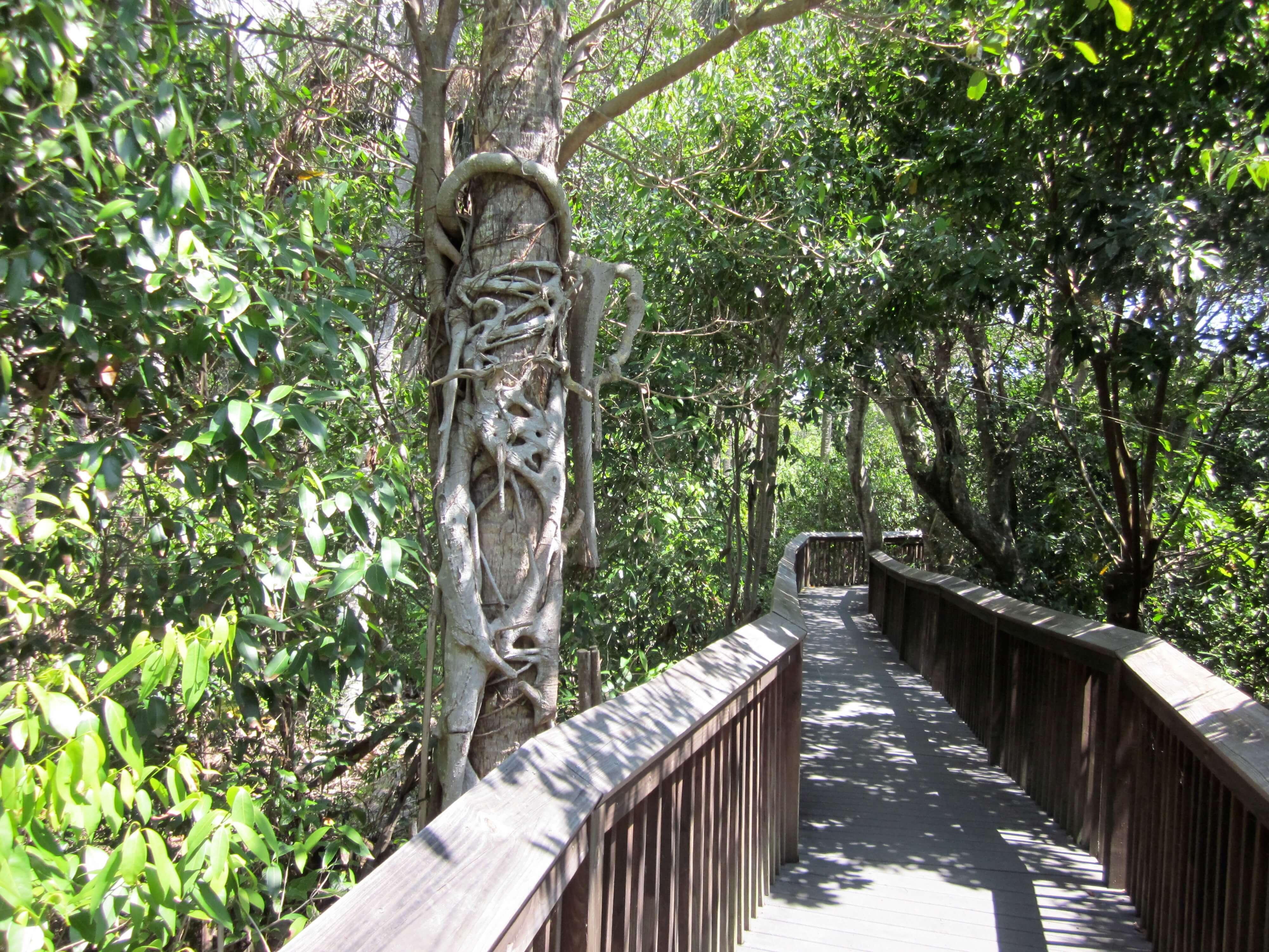 Pontos turísticos em Boca Raton: Gumbo Limbo Nature Center