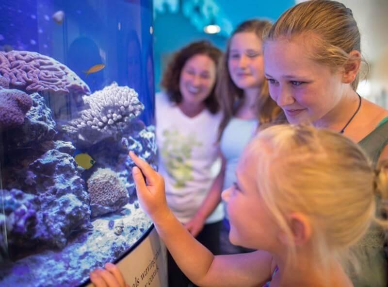 Pontos turísticos em Sarasota: Mote Marine Laboratory & Aquarium