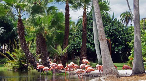 Pontos turísticos em Sarasota: zoológico Sarasota Jungle Gardens