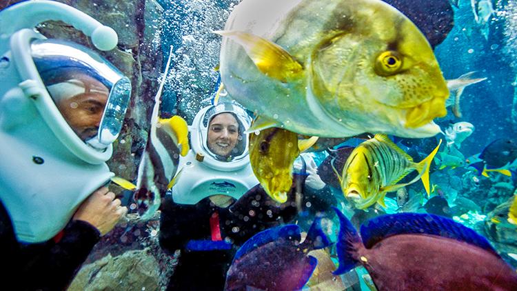 Parque Discovery Cove em Orlando: SeaVenture