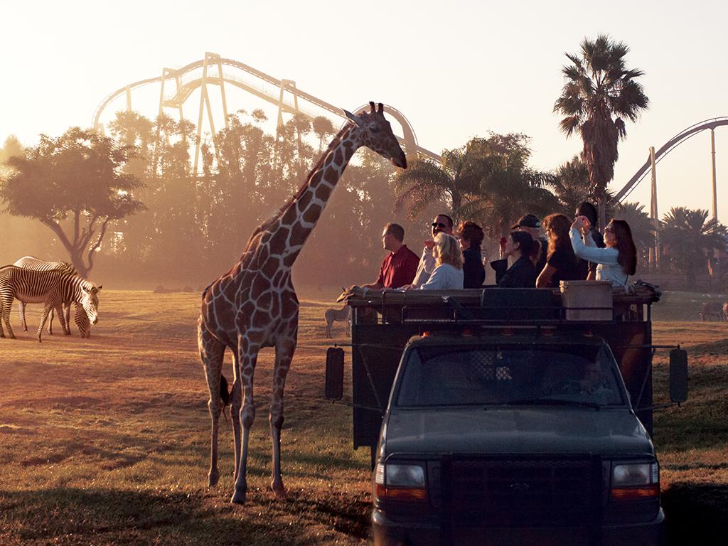 Serengeti Safari no parque Busch Gardens em Tampa
