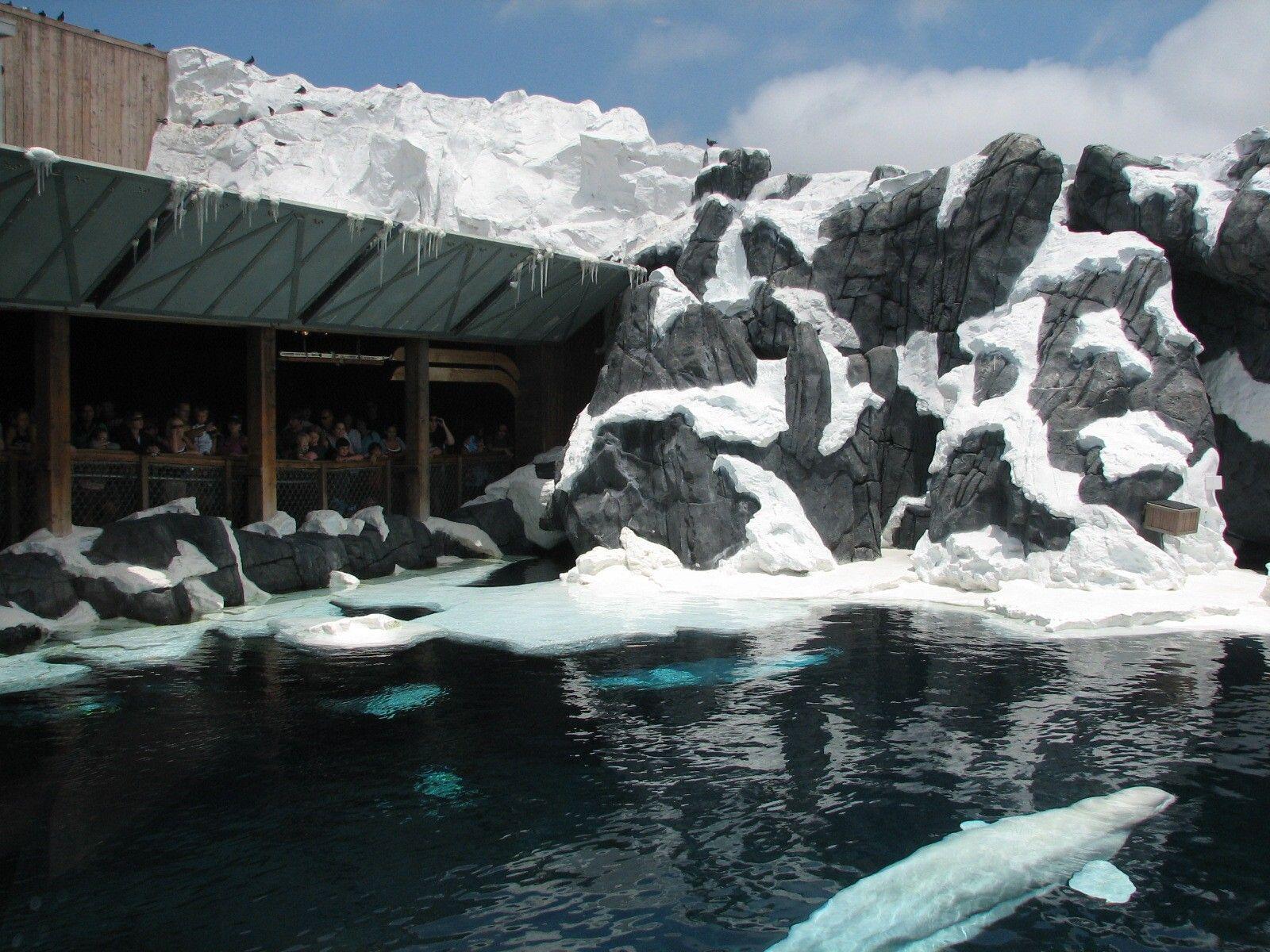 Parque SeaWorld em Orlando: Wild Arctic