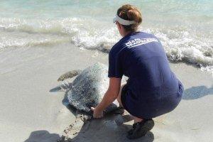 Aquário Miami Seaquarium: Conservation Outpost