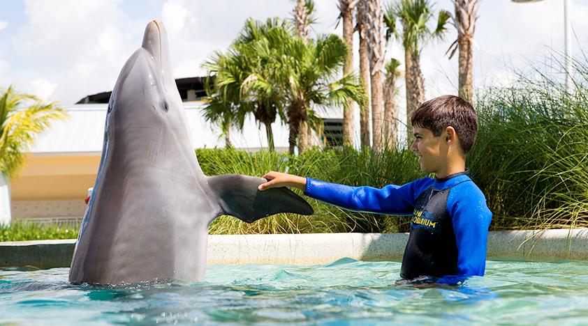 Criança nadando com golfinhos no Miami Seaquarium