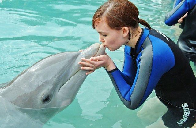 Nadar com golfinhos no Miami Seaquarium: interação com golfinho