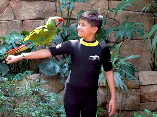 Encontro com animais nos bastidores do Discovery Cove em Orlando