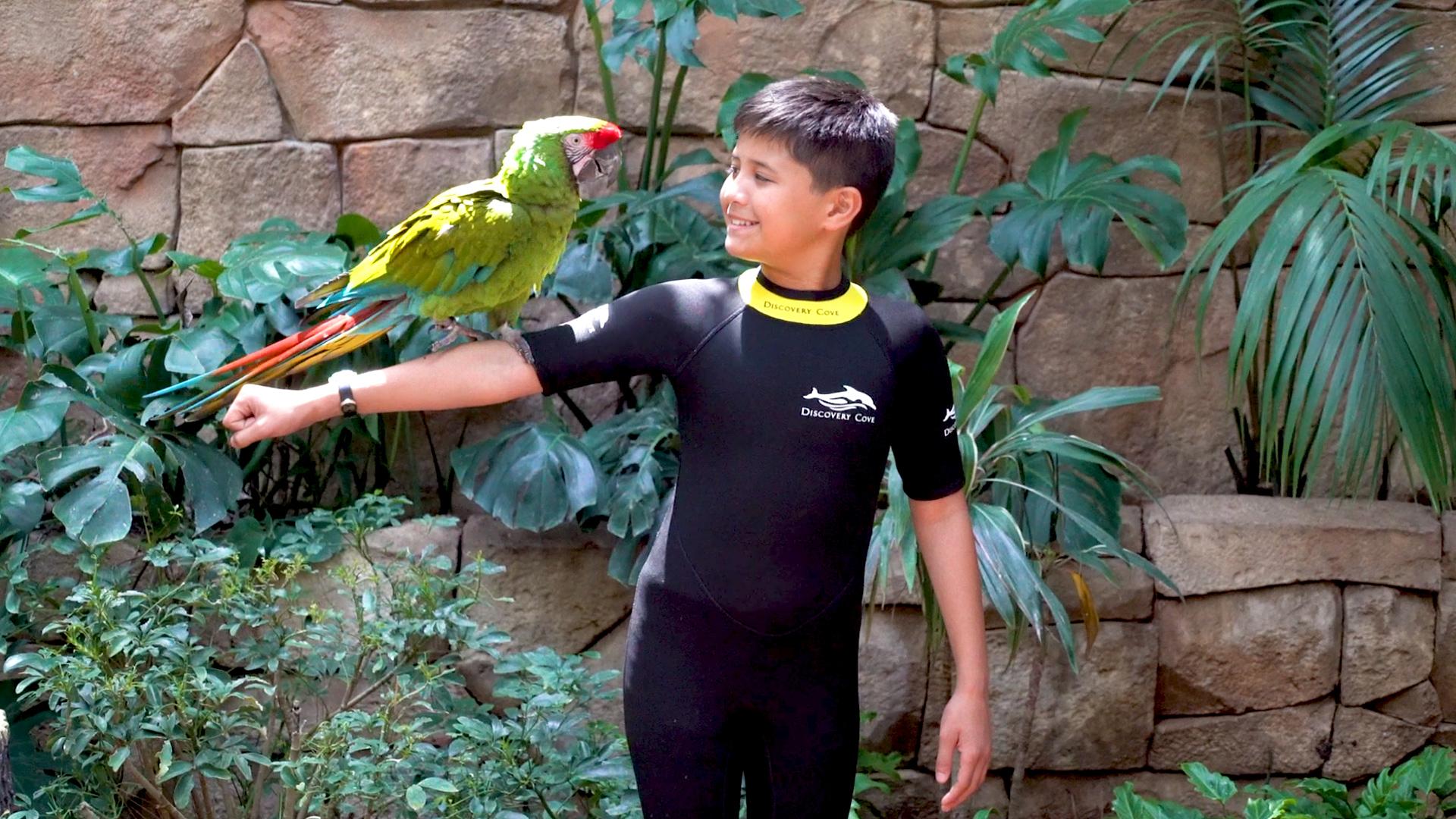 Atração com aves no parque Discovery Cove em Orlando