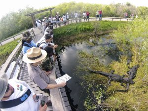 Passeio de aerobarco no Parque Nacional de Everglades: Everglades National Park