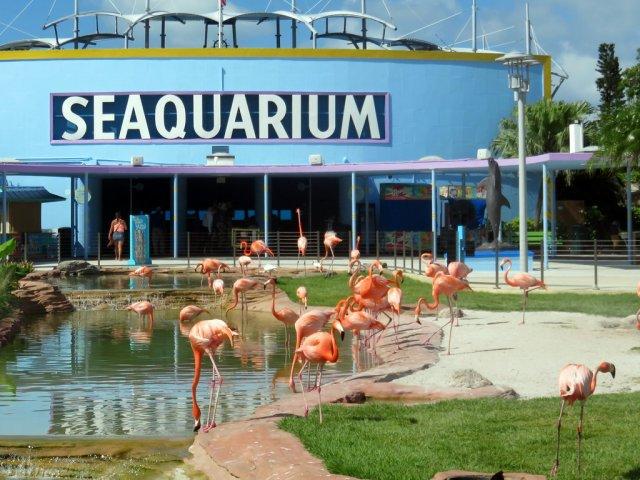 Ingressos para o aquário Miami Seaquarium: flamingos