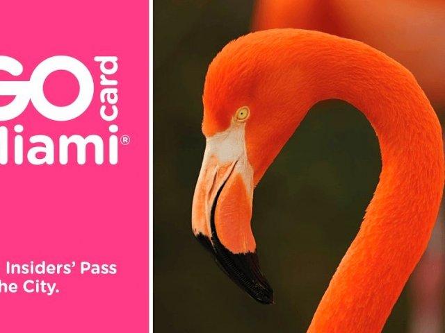 Aproveite diversas atrações com o Go Card Miami