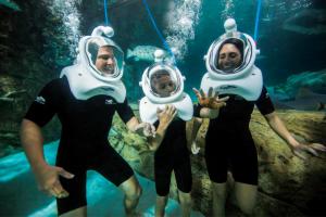 Mergulho Sea Trek no Miami Seaquarium: mergulhadores