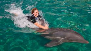 Nadar com golfinhos no Miami Seaquarium: Dolphin Odyssey