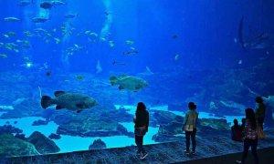 Aquário Miami Seaquarium: aquário com espécies de peixes
