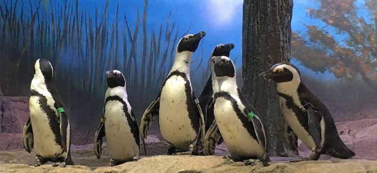 Ingressos para o aquário Miami Seaquarium: Penguin Isle