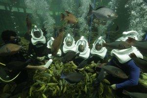 Mergulho Sea Trek no Miami Seaquarium: recife tropical