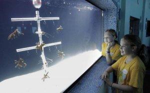 Aquário Miami Seaquarium: Rescue a Reef