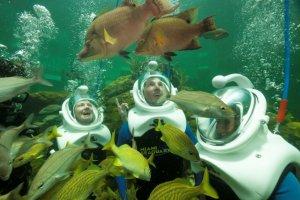 Mergulho Sea Trek no Miami Seaquarium: Sea Trek Reef Encounter