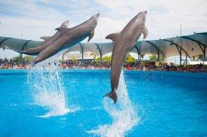 Aquário Miami Seaquarium: golfinhos