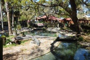 Pontos turísticos em Saint Augustine: Alligator Farm
