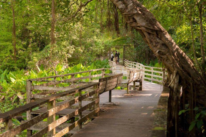O que fazer em Naples: Corkscrew Swamp Sanctuary