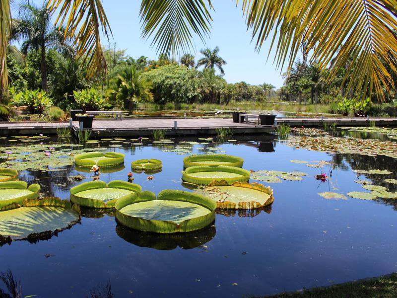 O que fazer em Naples: Jardim Botânico de Naples