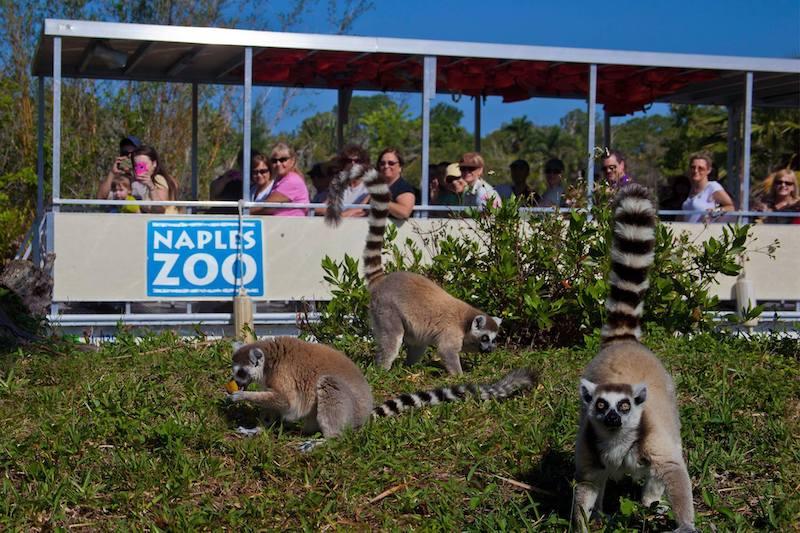 O que fazer em Naples: Naples Zoo at Caribbean Gardens