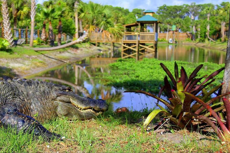 Parque Wild Florida Airboats & Gator