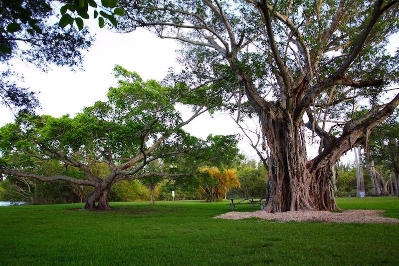 Matheson Hammock Park em Coral Gables: parque